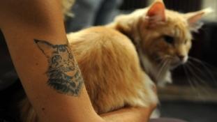 New York betiltotta a háziállatok tetoválását