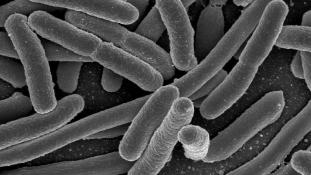 Rezisztens baktériumot találtak a Rióban