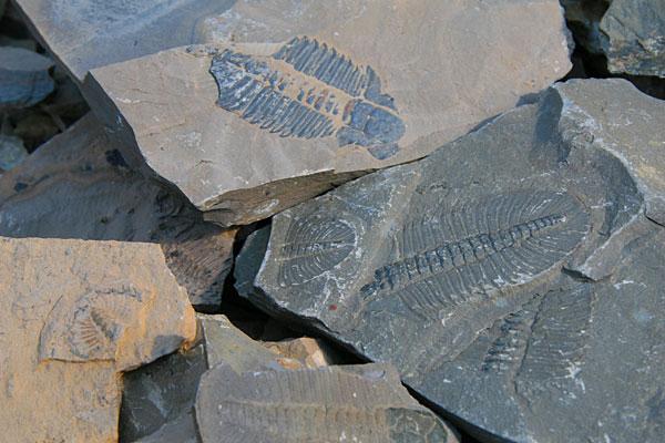 kanada-természeti-csodák-burgess-fosszíliák-yoho