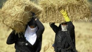 Súlyos válság az iraki mezőgazdaságban