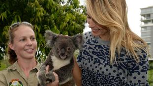 A világ minden tájáról küldtek kesztyűket a megsérült koaláknak