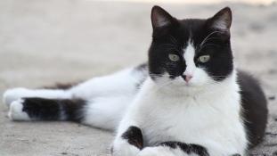 Szó szerint a sírból jött vissza egy macska