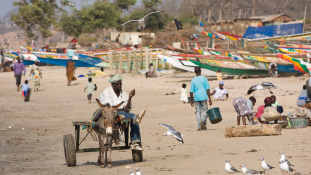 A szigor, a közvetlen ellenőrzés éve jön Gambiában