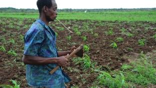 Ha nincs pénze a gazdának, besegít a tartományi kormány