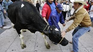 Costa Rica igényes vevőt talált a marhahúsra