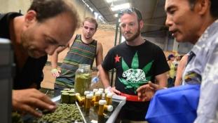 Pénzügyi könnyítések az orvosi marihuána iparban