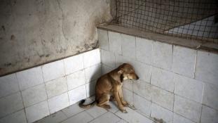 Nyomkövetőt kapnak a kóbor kutyák Iránban