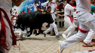 Egyetemista fiút öklelt fel egy bika