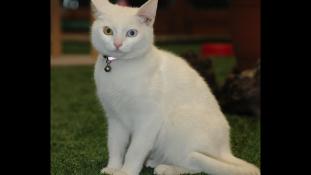 Különös macskát mentettek török aktivisták