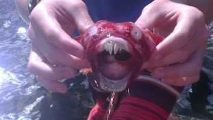 Rejtélyes tengeri szörnyet találtak egy dél-afrikai strandon
