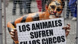 Állástalan cirkuszi állatok szerető gazdát keresnek Mexikóban