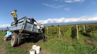 Brüsszeli tőke a grúz szőlőtőkéknek