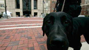 Mit keresnek a kutyák a san-diegói tárgyalóteremben?