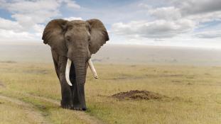 Elefántok védelméről tárgyaltak Botswanában