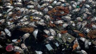 Río2016: Tömeges halpusztulás a szennyezett olimpiai vizekben