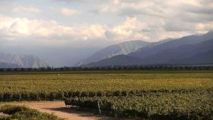 A brazil szomszéd gyengélkedik, de a mezőgazdaság kisegítheti Argentínát