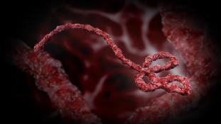Folyamatosan csökken az ebola nemzetközi terjedésének kockázata