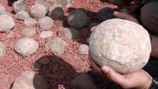 Több tucat dinoszaurusztojást találtak Kínában