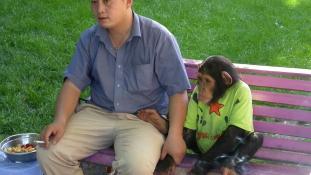 A csimpánzoknak is járnak az emberi jogok