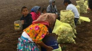 Mexikó szégyenletes munkakörülményei