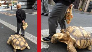 Sétáljon teknőssel!