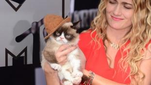 Az internet kedvencei: a macskák elmúlt tíz éve