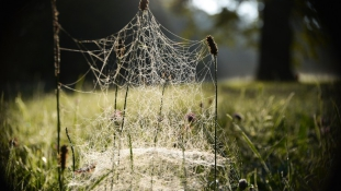 Pókeső Ausztráliában
