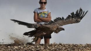 A kihalás széléről hozták vissza az izraeli keselyűket
