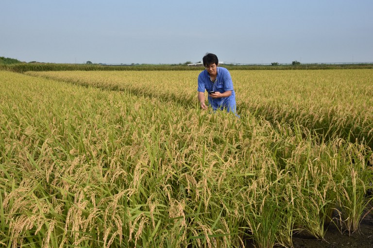 JAPAN-AGRICULTURE-RICE-TRADE-SOCIAL