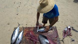 Mennyivel tartozik a BP a mexikói halászoknak?