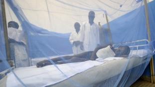 Malária ellen szedjen Viagrát