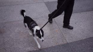 Dokumentumfilm készül a rendőri brutalitásról… a kutyák ellen