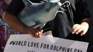 Volna szíve megenni egy delfint?