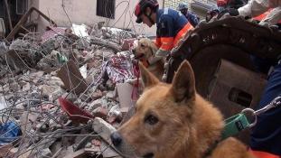 Nepálban mentett életeket a halálra ítélt kutya