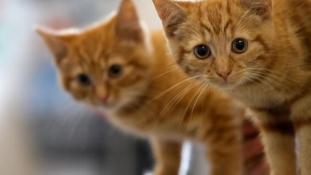 Hatszáz macskát főztek a levesbe