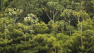Vasút az amazonasi vadonon keresztül?