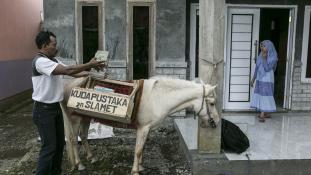Könyvtár-lóval (négylábúval, nem harapóssal) az írástudatlanság ellen