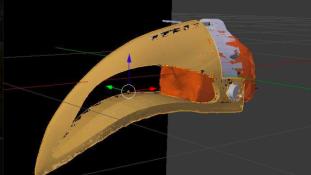 3D-nyomtatással kap új csőrt egy tukán