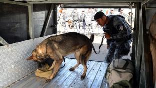 A braziloknak több kutyájuk van, mint kisgyerekük