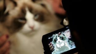 Itt az év legjobb híre: a macskás videók jót tesznek nekünk