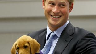 Állatmentő munkát vállal az embermentő herceg