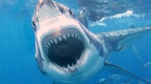 Cápatámadás Dél-Afrikában