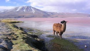 The New York Times Travel: Bolívia kihagyhatatlan