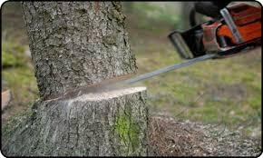Vágják a fát hűvös halomba, csak éppen majdnem mindenki lop belőle