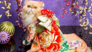 Üdv a kimonós macskák világában