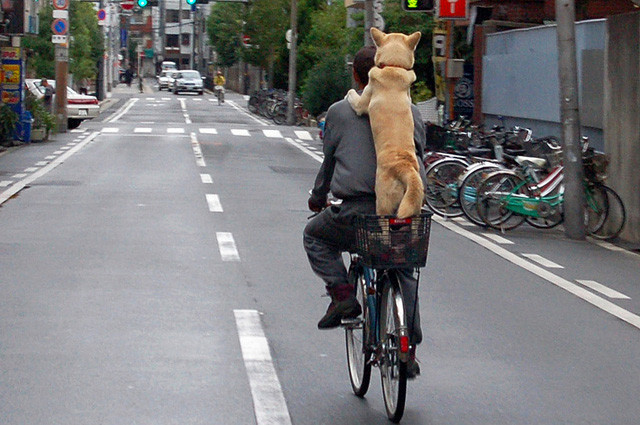 new-bicycle-rules-japan-2-640x425