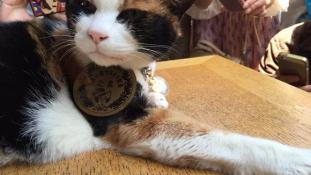 Elhunyt a 16 éves macska állomásmester