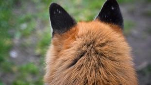 Indulás a japán rókafaluba!