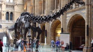 Ön befogadná Anglia legnépszerűbb dinoszauruszát?