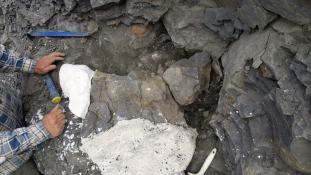70 millió éves őskövületet találtak Alaszkában
